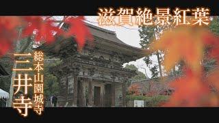 滋賀絶景紅葉2019 「三井寺」
