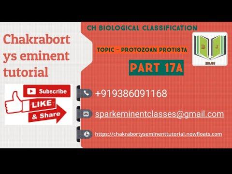 Medicamente pt paraziti intestinali adulti
