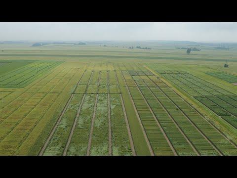 Badają odmiany roślin i doradzają rolnikom