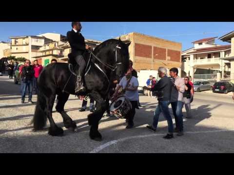 Sfilata Raffadali 2016 con il grande frisone Thomas