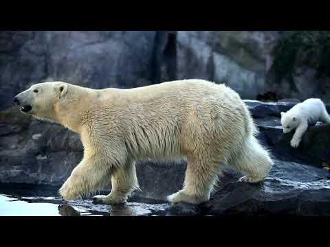 Trump approves oil drilling in Alaska wildlife refuge