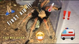 Tarantula Pairing GONE WRONG ~ PLEASE LEARN FROM MY MISTAKE !!!