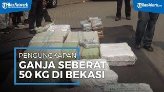 BNN Ungkap Penyelundupan Setengah Ton Ganja Menggunakan Truk Pengangkut Pisang di Bekasi