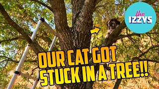 Our cat is stuck in a tree!