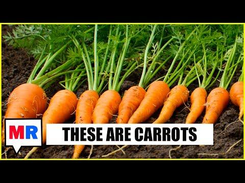 Vaccine Carrots Better Than Vaccine Sticks w/ James Hamblin