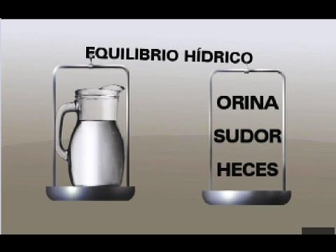 El agua y la hidratación en el ser humano