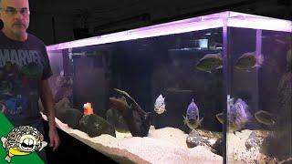 1000 Gallon Aquarium
