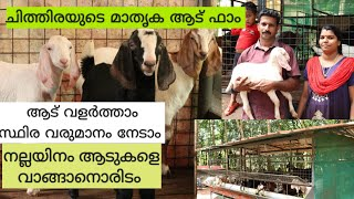 Profitable Goat Farming|കുറച്ചു സ്ഥലം കൂടുതൽ ആടുകൾ |Malabari Goats|Goat Farm Kerala