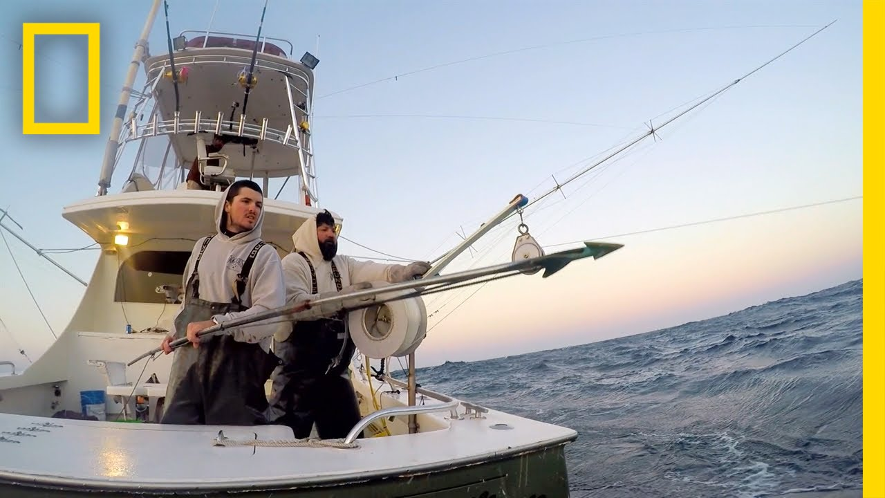 Welcome Aboard, Bluefin | Wicked Tuna: Outer Banks thumbnail