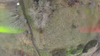 Acro FPV Quad Flight Test