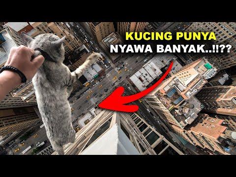 MARI BUKTIKAN..!! Apakah Kucing Benar - Benar Memiliki 9 Nyawa..??? #YtCrash