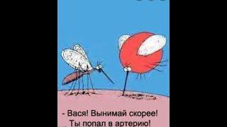 Что делать чтобы комары не сосали кровь