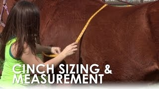 How To Measure For A Horse's Cinch Size Without a Saddle