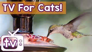 Cat TV - The BEST Calming Videos for Cats, Music and Birds in HD - Relaxing Music and Nature Footage
