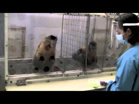 אפליה בשכר דרך עיניי הקוף