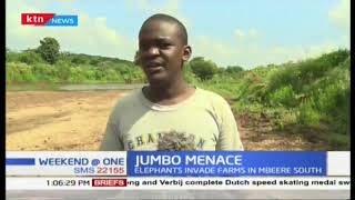 Lose in Mbeere South as Elephants from Mwea game reserves destroys crops from the farms