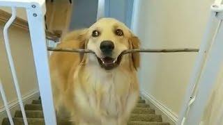 Смешные кошки и милые собаки Приколы с кошками и собаками Калейдоскоп за 07 08 2018