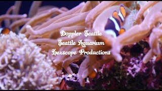 LexScope x Doppler x The Seattle Aquarium