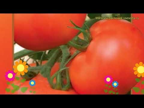 Томат Астраханский. Краткий обзор, описание характеристик, где купить семена solánum lycopérsicum