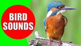 Bird sounds for kids - PART 1 - Bird Identification: Children Learn Common City Birds and Fowls