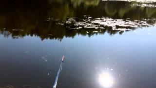 Отчеты о рыбалке в тетюшах