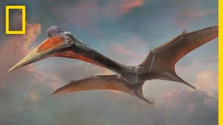 Pterosaurs 101 | National Geographic