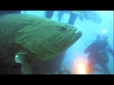 Scuba Diving Florida's Gulf of Mexico – Clearwater Florida