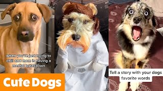 Silly Dog Bloopers & Reactions | Funny Pet Videos