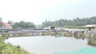 Tin Tức 24h: Hệ lụy kéo dài khi lấn sông nuôi tôm ở Quảng Ngãi