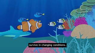 Why do we need to help the Great Barrier Reef - with captions