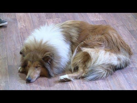 В России хотят ввести налог на домашних животных