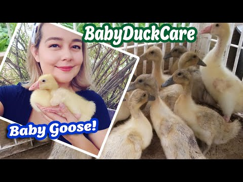 , title : 'Duckling & Gosling Care Supplement Feeding