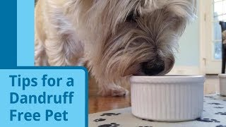 Tips for Dealing With Pet Dandruff