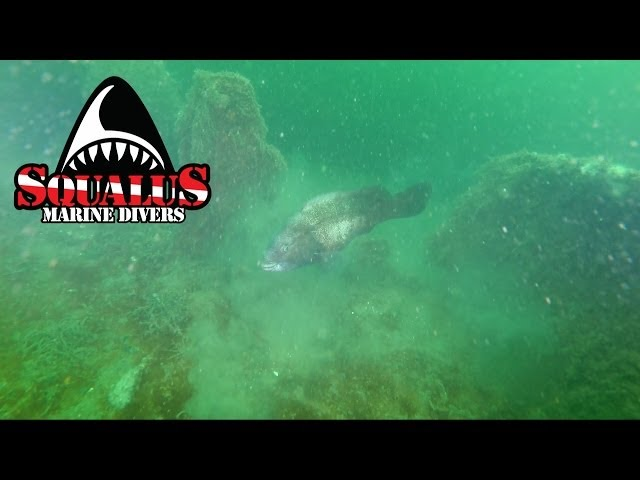 ARTIFICIAL REEF AT SMITHTOWN BAY NY MONSTER BARGE -SQUALUS MARINE DIVERS