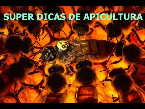 , title : 'Super Dicas de Apicultura Para Iniciantes