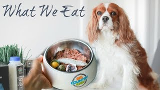 WHAT HERKY AND MILTON EAT | Biologically Appropriate Raw Feeding for Dogs