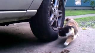 Эти двое - настоящая жизнь Тома и Джерри - смешные коты