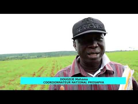 Relance de la filière blé au Cameroun: l'exemple de Wassandé