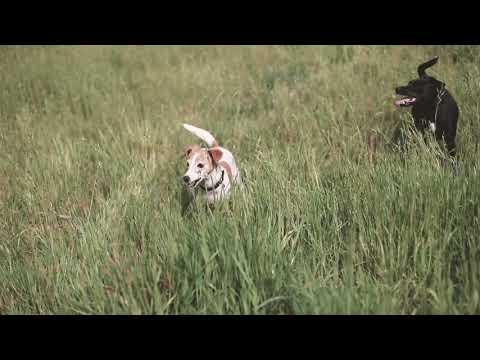 Knochen Hundespielzeug