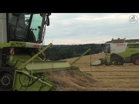 Grassamen Ernte vom Mähen bis zur Lagerung - Multi Agrar Claußnitz GmbH