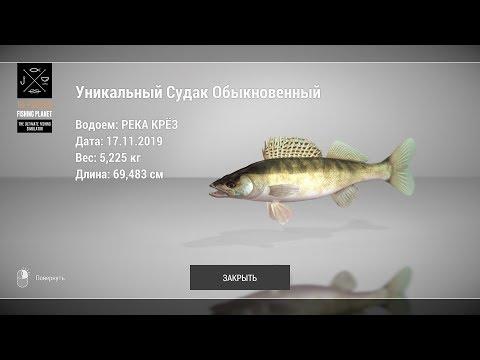 The Fisherman - Троллинг: Уникальный Судак Обыкновенный (Река Крез)