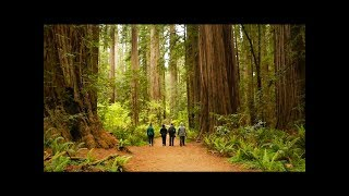 Camping in the Redwoods - Jedediah Smith Redwood State Park