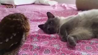 Приколы с кошками 2018.  Смешные коты и кошки.  Для поднятия настроения!