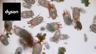 Down in the dust lab: Dyson microbiologists tackle dust mites, dirt and allergens.