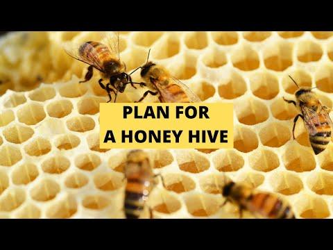 , title : 'Honey Hive Plan | Beginner Beekeeper Episode 15