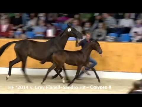 Video Vorschau von Grey Flanell