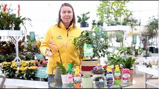 PETITTI How To Fertilize Houseplants