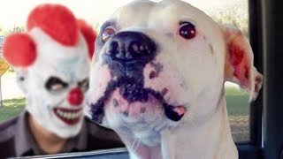Funny Dogs Scared of Masks Compilation - Video Youtube
