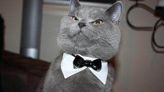 Коты разбойники 19 эп. Интеллигент. Лучшие приколы декабрь 2016