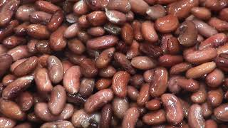Lyco Dry Bean Processing